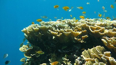 Explore Great Barrier Reef online