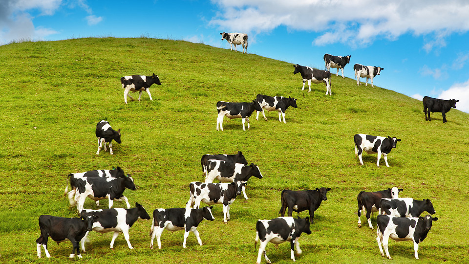 Cargill Cattle Plant Closes Due to Global Warming