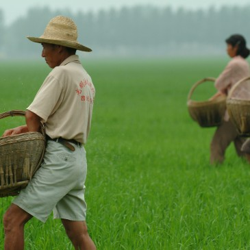 Climate Change Adaptation for Agriculture, Forests
