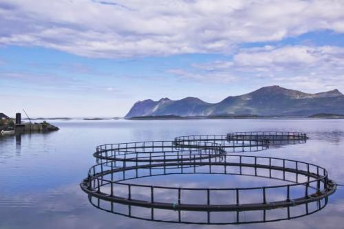 Disease threatens aquaculture in developing world