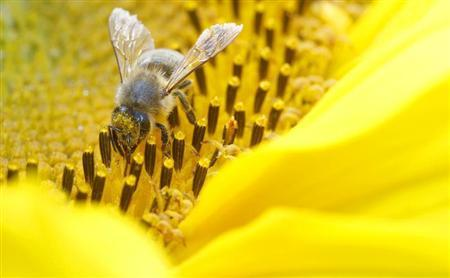 EU could impose pesticide ban to protect bees