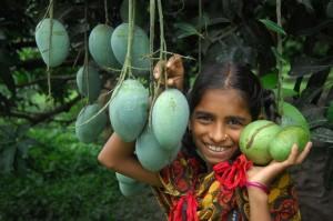 Haribhanga mango expected in Rangpur1